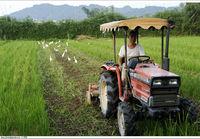 Rice Field 大溪