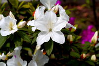 Click Here to view Pureness in Full Size