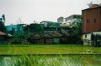 Click Here to view Taoyuan Rice Paddy  in Full Size