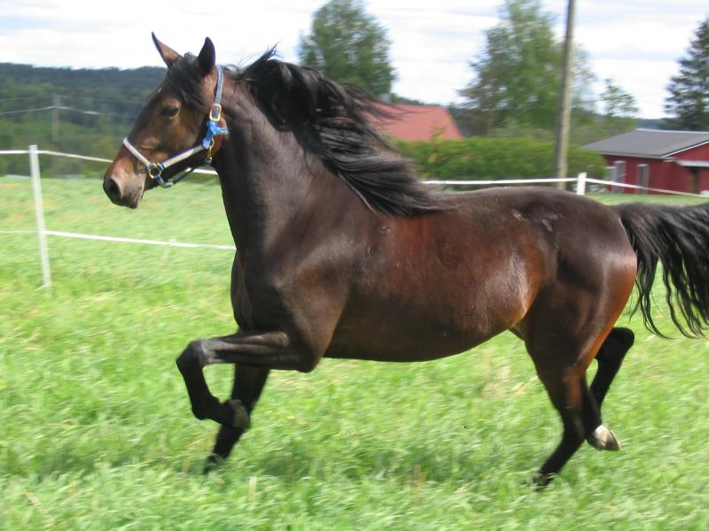 Aureole running