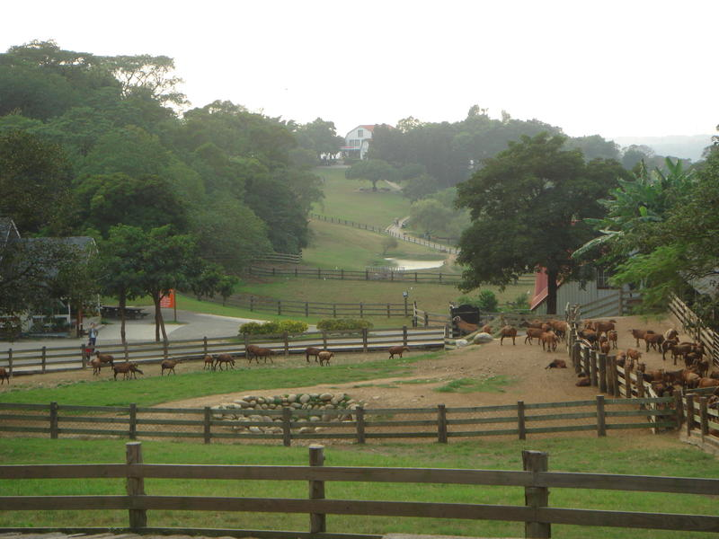 Flying Cow Ranch,Miaoli,Taiwan