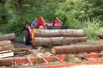 A load of Logs for the Mill