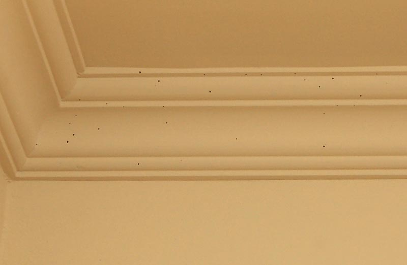 Termites in The Crown Molding