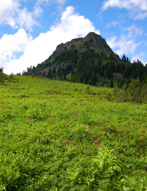 Meadow Mountaion