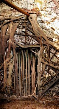 Treehouse, Tainan