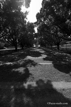 Tree shadows