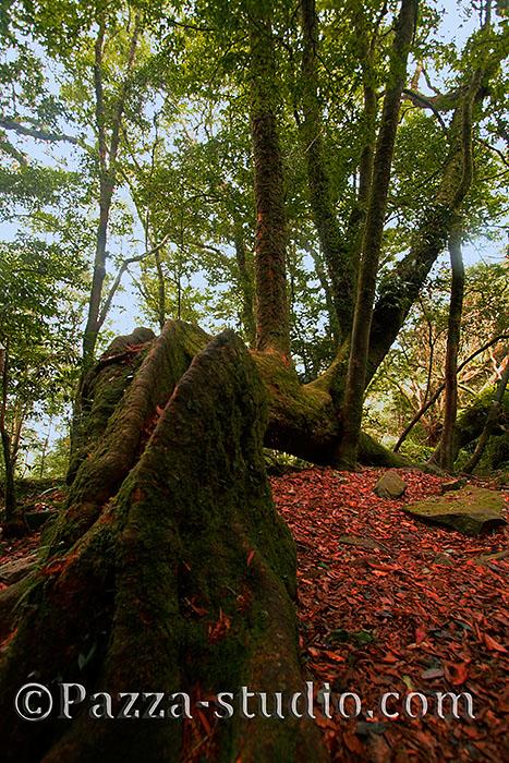 Trees of Taiwan