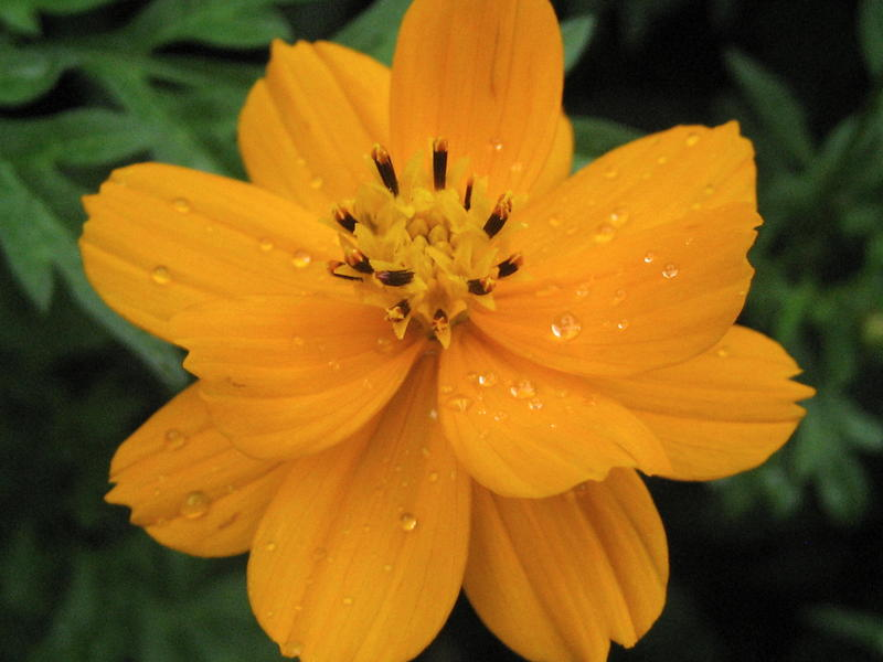 Lugu Flower