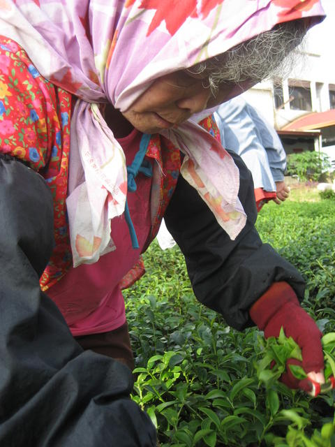 Tea Woman2