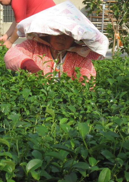 Tea Woman3