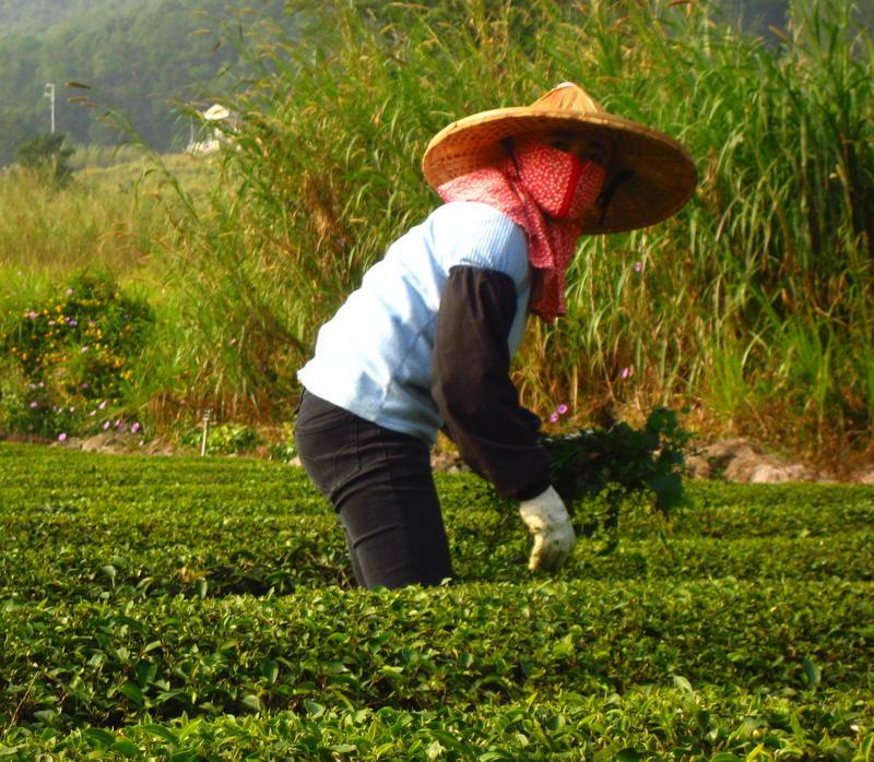 Tea Woman6