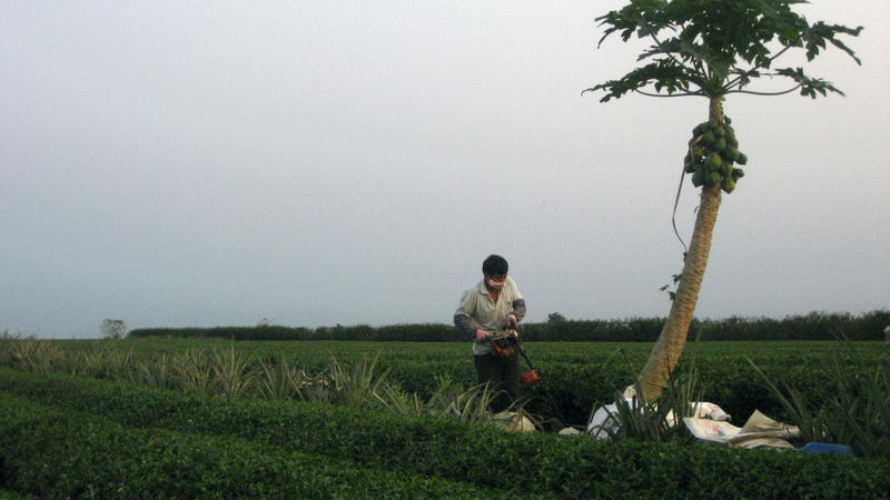Qing Shui Yen6