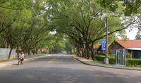 Jong Shin Village Tree Lined Street