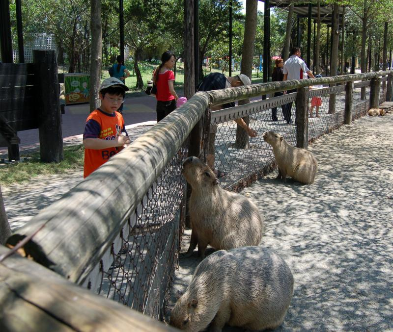 Giant Rats at the zoo