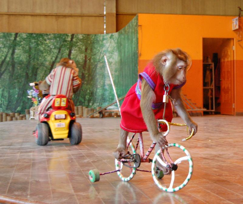 Monkey Rides Bicycle