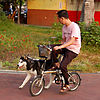 Riding The Dog