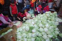 Mass Cabbage