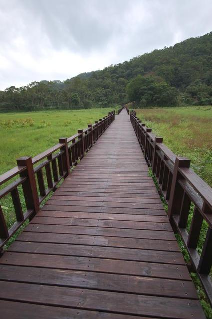 Swamp Bridge