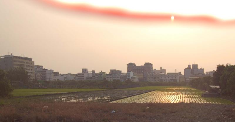 Sun Setting on Rice Paddies