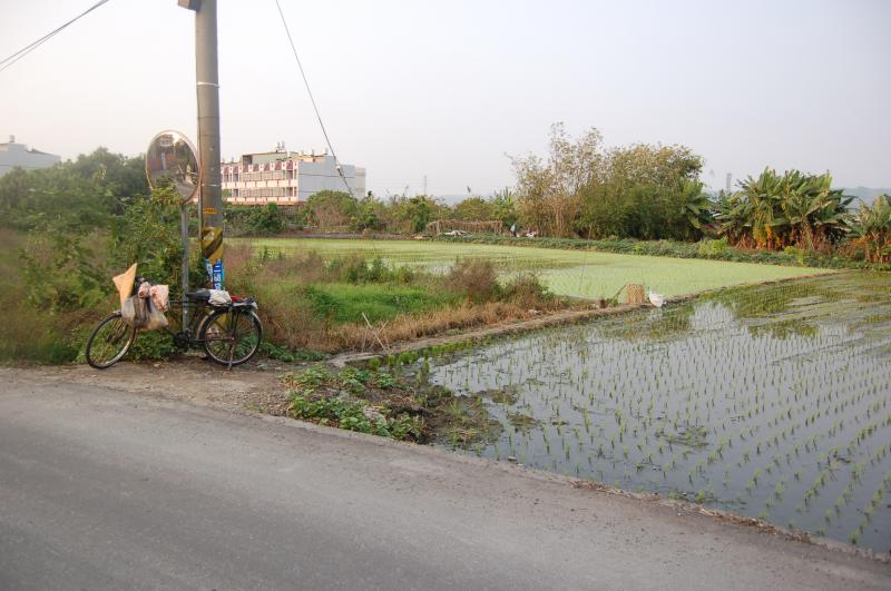 Bicycle Parked next to Rice Paddy