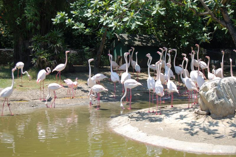 Flamingos at the Zoo