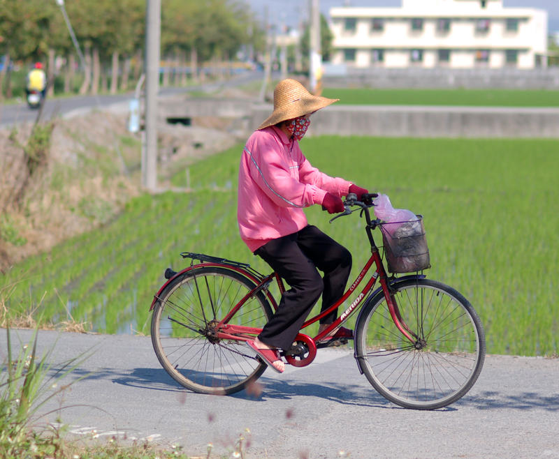 Bicycle through Rice Fields