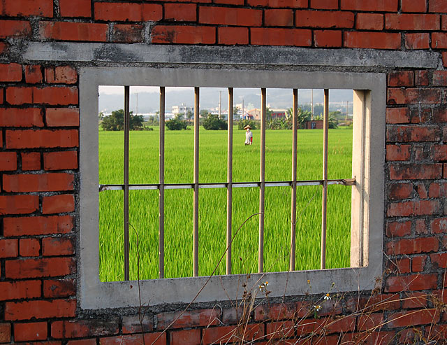 Window On Rice