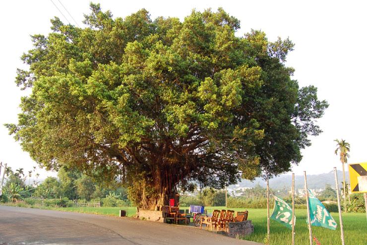 Rest Tree