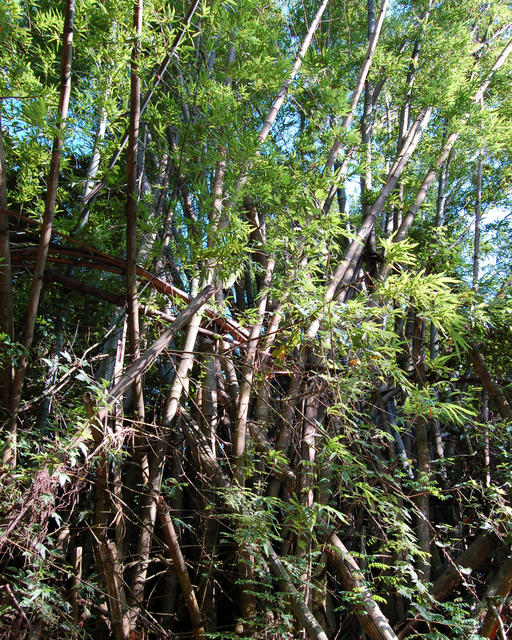 Bamboo Bottom